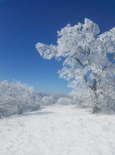 bob bald hike during winter